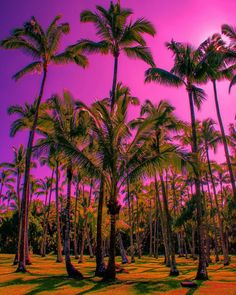 Palm trees photography palm tree pictures, nature scenes и n Palm Tree Pictures, Nature Pictures, Summer Pictures, Cool Pictures, Pink Sky, Nature Scenes, Strand, Palm Trees, Picture Video