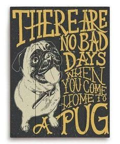 There are no bad days when you come home to a pug.