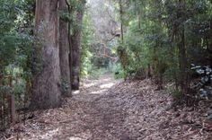 Reserva Forestal Federico Albert  Region del Maule Chanco