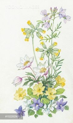 Botanical Drawings, Botanical Illustration, Botanical Prints, Watercolor Illustration, Silk Painting, Painting & Drawing, Flower Prints, Flower Art, Watercolor Flowers