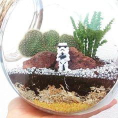 May the force be with you!  Terrario Storm Trooper  #suculentas #cactos #starwars #terrarium #terrario #lisboa