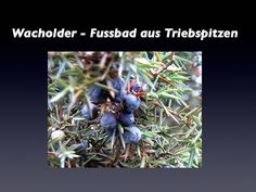 Teebaumöl bekämpft den Fußpilz, während Aloe die gereizte, juckende Haut beruhigt.