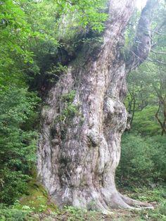 yakusima 縄文杉ともののけの森を満喫する!屋久島トレッキングの楽しみ方 | nanapi [ナナピ]