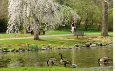 Duck Pond...I think the bench i was proposed to on..fall of my 4th year