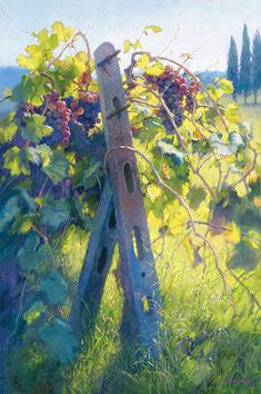Imported Vines By June Carey