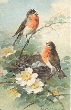 Bird Art- Vintage postcard - artist Catherine Clein by sofi01, via Flickr by melisa