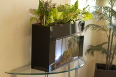 Here's a DIY guide to creating your home backyard aquaponics syste.  Aquaponics is an elegant ecological arrangement of fish and plants that allows year-round food production with zero waste.