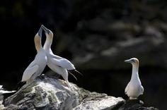 Jealous Bird - © Richard Packwood / Getty Images