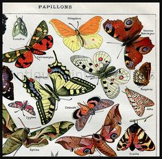 So colorful ! Butterflies and Moths antique print