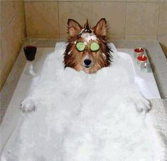 11 Dogs Who Are Totally Cool With Being Single This Valentine's Day