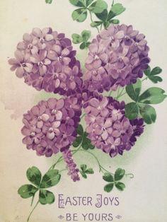 shamrock lilacs