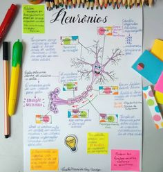 mapas mentais Home Decor home decor trends 2018 Student Studying, Student Life, Med Student, Chemistry Notes, Science Notes, Medicine Notes, Mental Map, Study Organization, School Notes