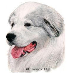 Cimmaron Dog Art creates art work, t shirts, and decals for all breeds of dogs including corgis,irish setters and vizslas. All Breeds Of Dogs, Wood Burning Patterns, Great Pyrenees, Irish Setter, Dogs Golden Retriever, Dog Art, Polar Bear, Being Used, Hand Drawn