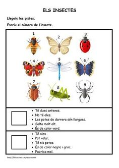 Comprenem amb els insectes, Author: Length: 2 pages, Published: Catalan Language, Spanish Lessons For Kids, Maila, Lectures, Valencia, Comprehension, Reading, Nature, Animals