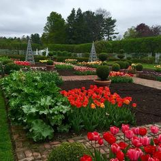 Still cloudy and spitting rain but we soldier on up in the vegetable garden ... May loose my tulips by trade secrets... But will just fill in with baby vegetables and hope they do not freeze their little backsides off!!!!! - cr