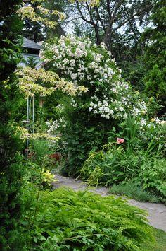 Three Dogs in a Garden: A Romantic Garden