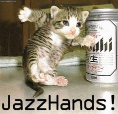 funny cat pictures - Google Search