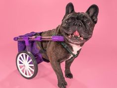 FiGo - Dog Wheelchair by Rickee - Thingiverse