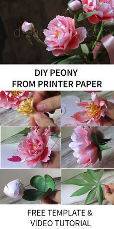 Step by step youtube tutorial and free template for DIY peonies from printer paper #paperflower #printerpapercraft #flowertutorial #freetemplate #freetutorial