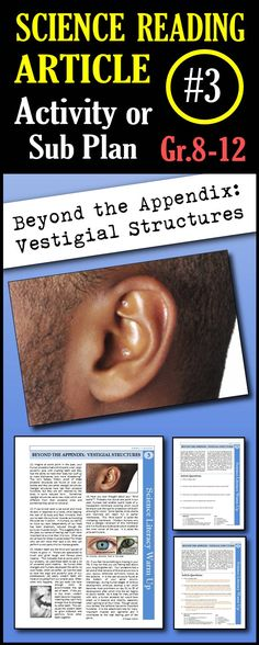 In this article, students will read about vestigial structures and about several different examples of human vestigial structures. This is a great in class activity, homework assignment, weekly science reading assignment, sub plan or in school suspension plan.  Use this to save time looking for engaging and appropriate articles with questions!