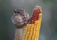 動物たちのユーモラスな仕草に思わずにんまり。2016年「コメディワイルドライフ・フォトグラフィー・アワード」の選考写真 : カラパイア