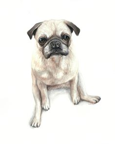 PROUD PUG MOPS DOG CANINE PORTRAIT  PAINTING PET DOG ART REAL CANVAS PRINT
