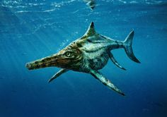 A prehistoric marine-reptile fossil found in Scotland's Isle of Skye represents a new species that lived about 170 million years ago, a new study finds.