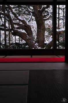 Celebrating the living art the tree offers all year long . Hosen-in temple, Kyoto, Japan