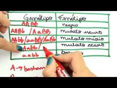 Me Salva! GEN28 - Herança quantitativa poligênica - YouTube