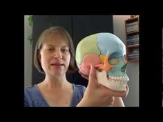 The Tour of the Cranium Part 1: Frontal and Ethmoid. First in a series of videos specifically for craniosacral therapists.