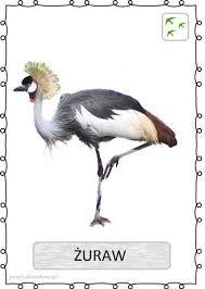 Podobny obraz Learning Time, Montessori, Poland, Birds, Education, Animals, Science, Natural, Poster