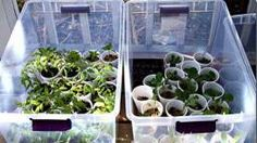 clear plastic tote greenhouse
