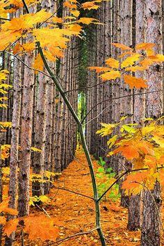 Trajeto do outono bela incrível