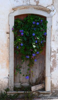 old-door-with-flowers - just look how beautiful blues pop on weathered wood!