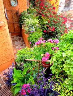 Flowers/plants at Tres Casitas