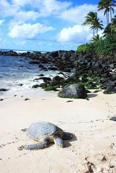 turtle beach, oahu.