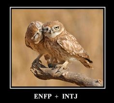 ENFP + INTJ - This is mine and my husband's personalities! :) Strong connection according to Myers-Briggs! I completely agree!