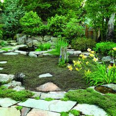 Take out the grass in the backyard?