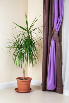 piante da interno, piante da camera da letto: orchidea | fiori e ... - Orchidea In Camera Da Letto