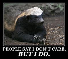Honey badger does care.
