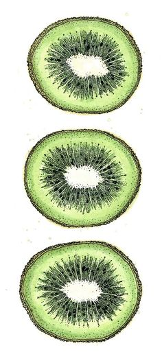 Kiwi drawing, ink and watercolour Ink Drawings, Love Drawings, Drawing Faces, Watercolor Fruit, Watercolor And Ink, Painting Inspiration, Art Inspo, Natural Form Art, Tattoos
