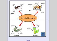 Schoolyard Safari 2 Teaching Art, Teaching Resources, Teaching Ideas, Science Biology, Year 2, Grade 2, First Year, Teacher Stuff, School Stuff