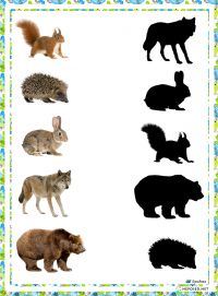 1 million+ Stunning Free Images to Use Anywhere Animal Activities For Kids, Preschool Learning Activities, Toddler Learning, Autumn Activities, Preschool Worksheets, Preschool Activities, Teaching Kids, Montessori Materials, Forest Animals