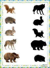 игра найди тень дикие животные