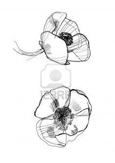 Drawing Poppy us.123rf.com