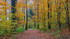 Vives couleurs d'automne Site Photo, Country Roads, Nature, Plants, Outdoor, Canada Landscape, Lake Geneva, Warm Colors, Landscape Photography