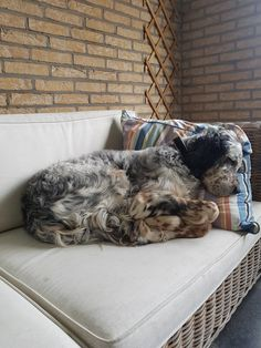 My English Setter Patch...