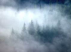 MISTY TREES: Nature Photography Print on Etsy,