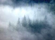 MISTY TREES Nature Photography Print by WildArtsStudio on Etsy, $20.00