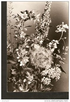 5k. Germany, Geburtstag Birthday - flora bunch of flowers bouquet - real photo by Ruth Jesora - DDR - Kohler & Busser